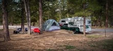 Boondocking With Dogs